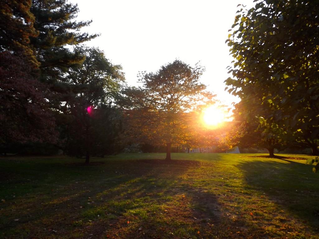 I took a fall photo walk of campus